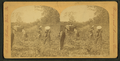 View of African American workers in a cotton field near Atlanta, by Roberts & Fellows 2.png