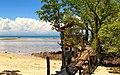 View of Sarangani Bay at 4ML Strand beach resort.jpg