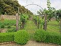 Villa di geggiano, giardino 20.JPG