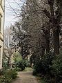 Villa la mattonaia, orti 04.JPG