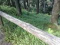 Vylet na Ostry, Sumava - 9 cervenec 2011 191.jpg