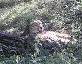 WZ-Gepard.jpg