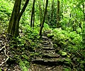 Waimoku Falls trail, Maui.jpg