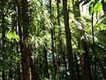 Wald (31490155996).jpg