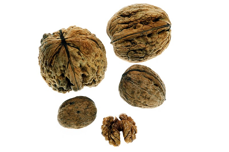 Persian Walnut: nut and edible seed.