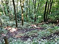 Wanderweg bei der Schwäbischen Alb - panoramio (4).jpg