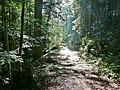 Wanderweg im Schweinbachtal zwischen Hirsau und Oberreichenbach - panoramio (1).jpg