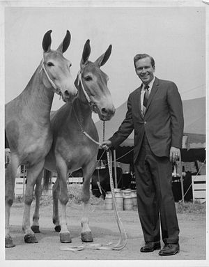 Warren E. Hearnes - Hearnes inspecting champion mules at the 1969 Missouri State Fair