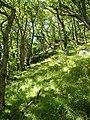 Wester Wood, East Lyn valley - geograph.org.uk - 128179.jpg