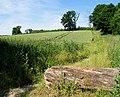 Wheat field near Basildon - geograph.org.uk - 21155.jpg