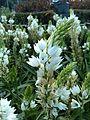 White flower11.jpg
