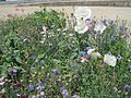Wildflower Project South Main District Memphis TN 2012-04-22 015.jpg