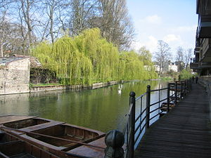 English: Willow Trees beside the Cam Within th...