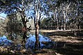 Wonga Wetlands, Billabong - panoramio.jpg
