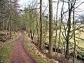 Woodland Path - geograph.org.uk - 120676.jpg