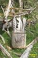 Woodland art (Ehrwald, Hochthörl Weg) (24591469761).jpg