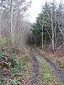 Woodland track - geograph.org.uk - 288688.jpg