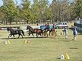 World Equestrian Games Driving 02.jpg