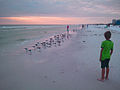 Young Boy Watching Birds, Siesta Beach, Sarasota, FL 2011-11-05.jpg