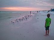Young Boy Watching Birds, Siesta Beach, Sarasota, FL 2011-11-05
