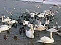Zagreb Jarun Frozen Birds 1.jpg