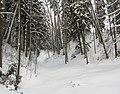 Zavolzhsky District, Ivanovo Oblast, Russia - panoramio - Andris Malygin (8).jpg