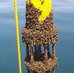 Biofouling - Current measurement instrument encrusted with zebra mussels