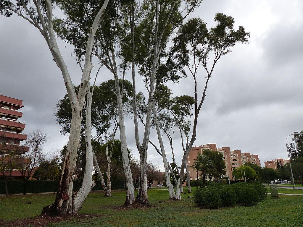 Archivo zona verde sevilla este sevilla espa a 2015 06 jpg wikipedia la enciclopedia libre - Apartahoteles sevilla este ...