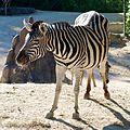 Zoo ZH DSC 3891 (4835731616).jpg