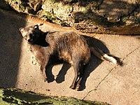 Zoo in Yalta 015.jpg