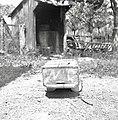"""Kraniček""- mali panj, Podgora 1962.jpg"
