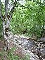 """""""Stara Ribarica"""" river - panoramio.jpg"""