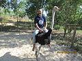 'Ostrich Riding' at 'Fairy Stream'.JPG