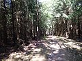 +20180611Müritz-Nationalpark.nahe Kratzeburg.-054.jpg