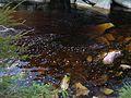 Água em Lençóis BA.jpg