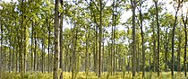 Šuma.jpg