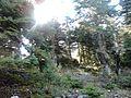 Παρνασσός - panoramio (3).jpg