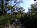 Апостоловский лес дорога.jpg