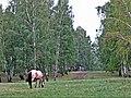 Выпас лошадей в окрестностях озера Якты-Куль.jpg