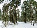 В лесу - panoramio - alinco fan (1).jpg