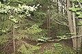 В темном лесу. Новодеревенский лес. Чистопольский р-н. РТ. Август 2013 - panoramio.jpg