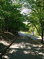 Голосіївський парк 3.jpg