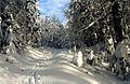 Дорога с Пихтовой Поляны - panoramio.jpg