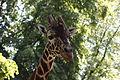 Жирафа.JPG
