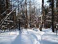 Зимой. - panoramio.jpg