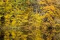 Золотая осень, Дениши - panoramio (2).jpg