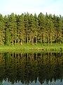 Ліс у річки - panoramio.jpg