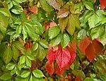 Мокре листя.jpg