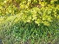 Одеса, Ботанічний сад, Французький бульвар 04-2018 09.jpg