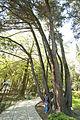 Парк «Дендрарий» с садовопарковой скульптурой и архитектурными сооружениями малых форм 01.jpg